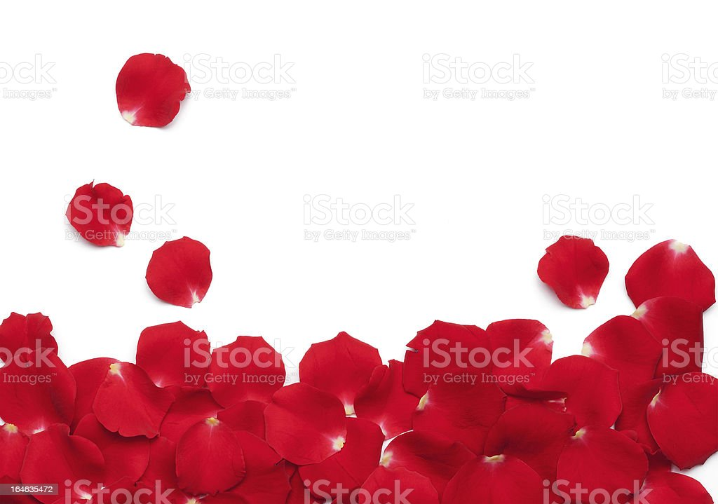 Red Rose Petals stock photo