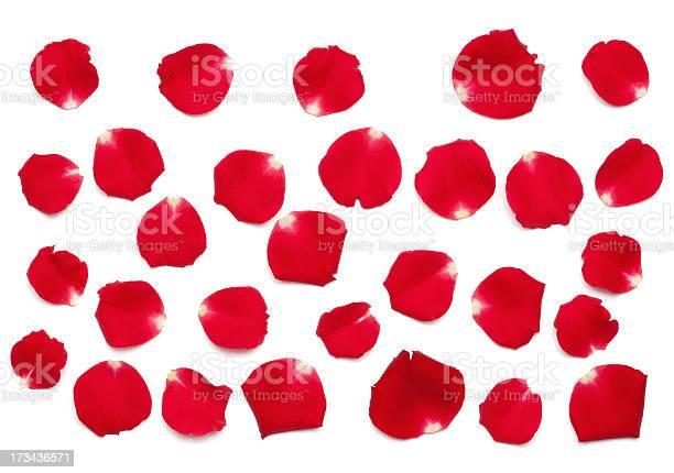 Red rose petals picture id173436571?b=1&k=6&m=173436571&s=612x612&h=xdkuirh5iugtrvpizlbgzyxflpn00qopfxzuvvmcwri=