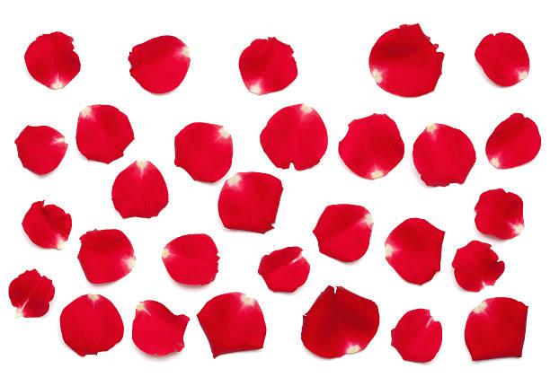 Red rose petals picture id173436571?b=1&k=6&m=173436571&s=612x612&w=0&h=r7grtogb63cjkdgidepzb9dkdleg5yw gdk gnnt9rs=