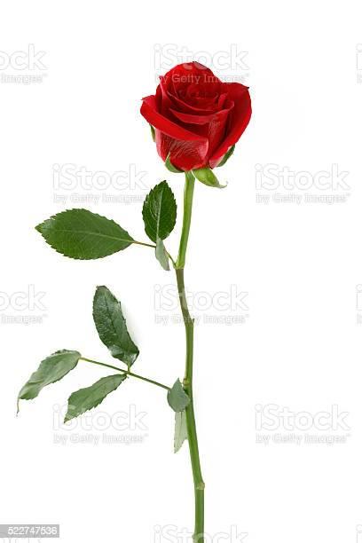 Red rose petals picture id522747536?b=1&k=6&m=522747536&s=612x612&h=p3b6nnlri6c60p8gczqnyowkr8wck8y32irkdfdmic0=