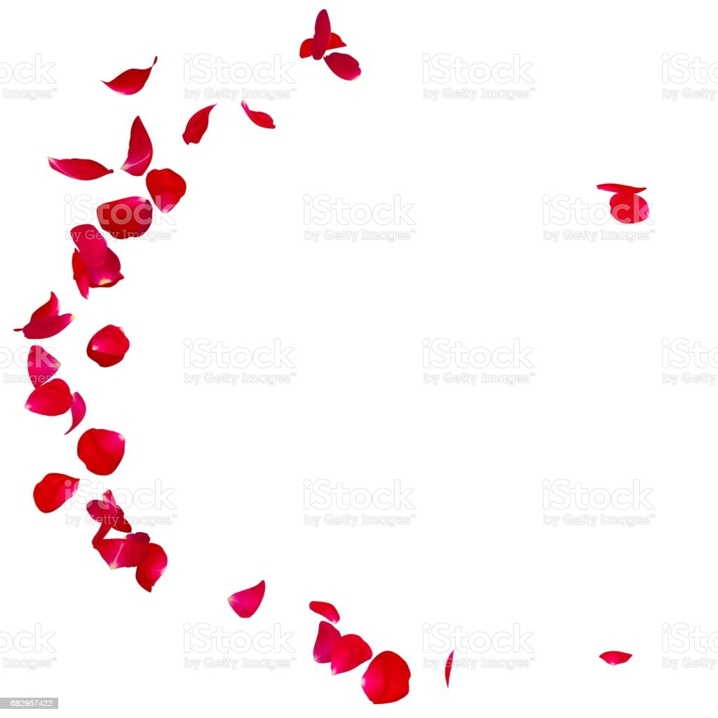 Red rose petals scattered on the floor in a semi-circle royalty-free stock photo