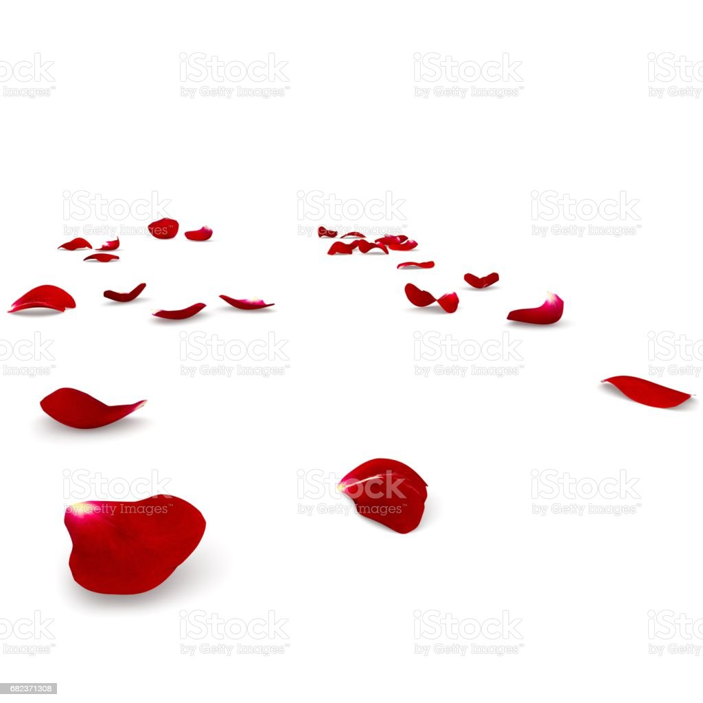 Red rose petals scattered on the floor foto stock royalty-free
