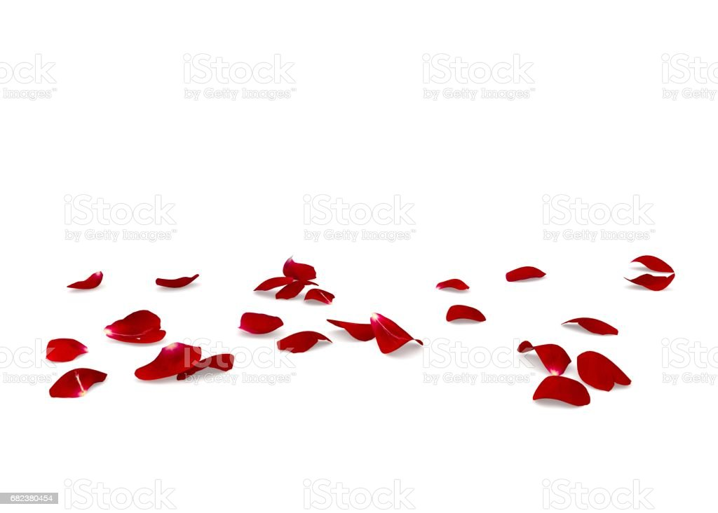 Red rose petals scattered on the floor zbiór zdjęć royalty-free