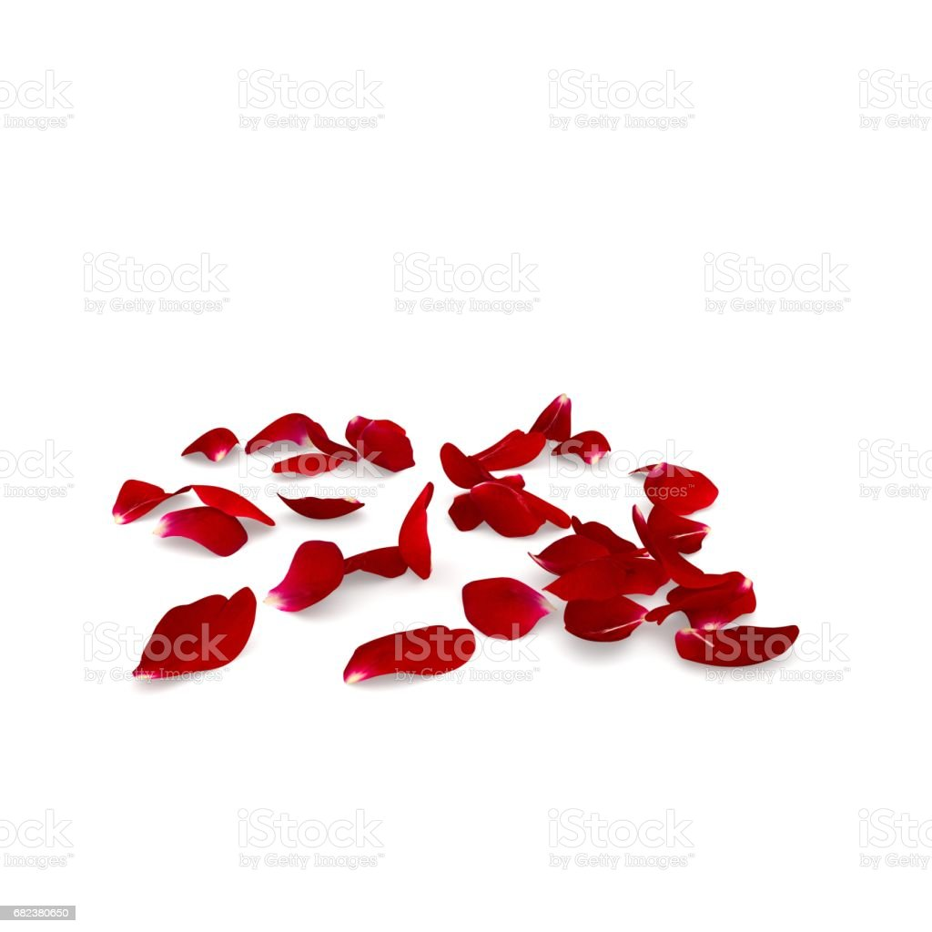 Red rose petals scattered on the floor royalty-free stock photo