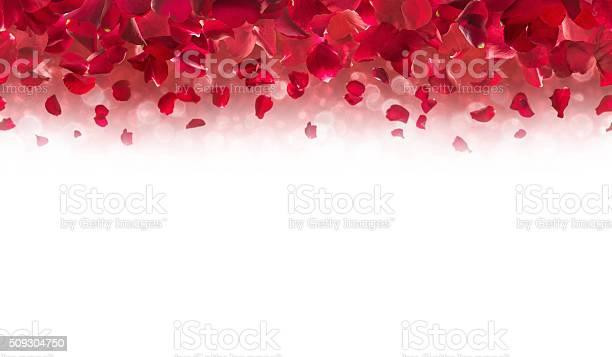 Red rose petals top border picture id509304750?b=1&k=6&m=509304750&s=612x612&h=wjsihbo98caaocb r49ye6l deuldc3no7novmzkj28=