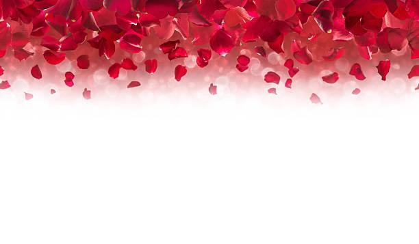 Red rose petals top border picture id509304750?b=1&k=6&m=509304750&s=612x612&w=0&h=g9hvhhrwpgl6au hwn ehp9 ldjdzlgu3dv tanmd38=