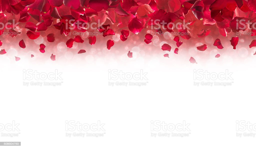 Red Rose Petals Top Border stock photo