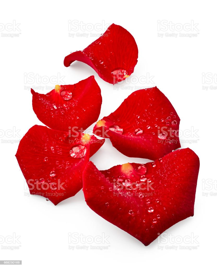 Red rose petals with drops of water foto stock royalty-free