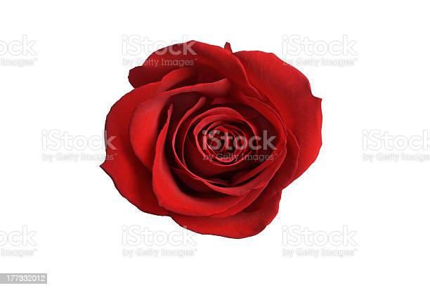 Red rose picture id177332012?b=1&k=6&m=177332012&s=612x612&h=w7wy5fuqmr7uecaswstatdsrbz5onb8epsxzmdmrigy=