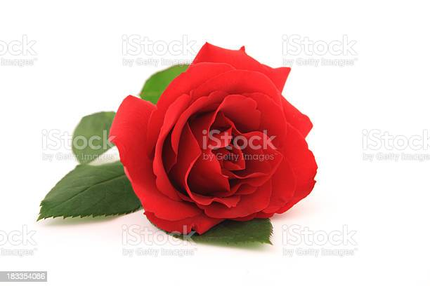 Red rose picture id183354086?b=1&k=6&m=183354086&s=612x612&h=03tr3sapetoymqevtozhm518wc uf6wmdwubi6vfqic=