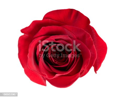 istock red rose 186953967
