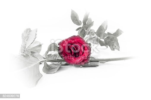 Red Rose Vintage Style