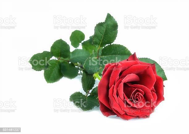 Red rose picture id531481237?b=1&k=6&m=531481237&s=612x612&h=5griru5td bnfgvqfr5mzv8aeyognsmaqaiivpczy5s=