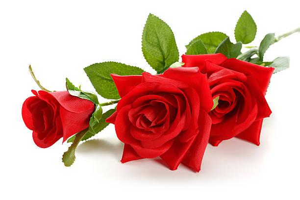 Red rose picture id638619588?b=1&k=6&m=638619588&s=612x612&w=0&h=8yevnaylrnaojvfqb9llqt8yxvgll3aa7deoadszgsw=