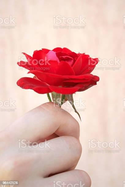 Foto de Rosa Vermelhas e mais fotos de stock de Beleza
