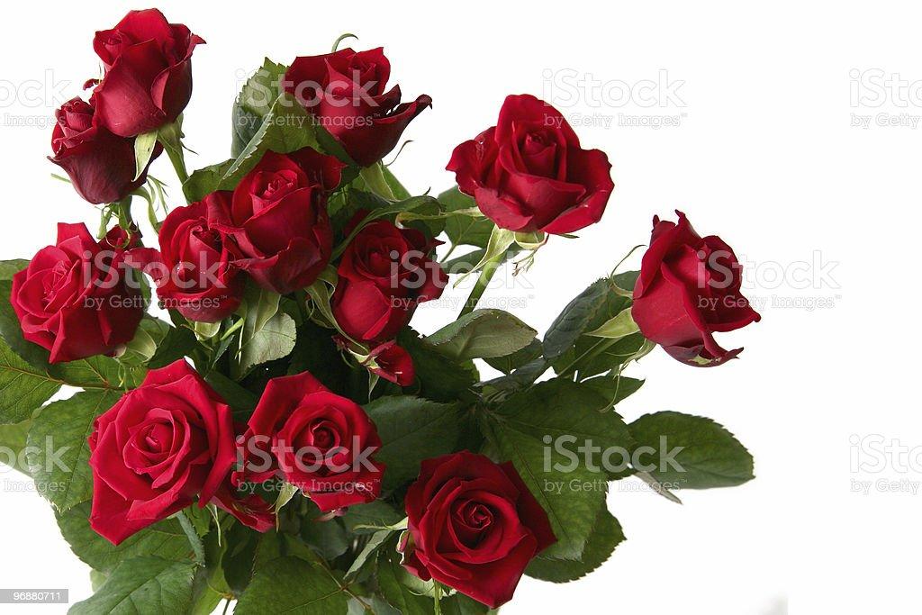 Rote rose Lizenzfreies stock-foto