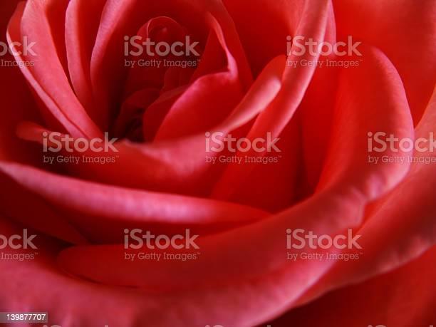 Red rose up close picture id139877707?b=1&k=6&m=139877707&s=612x612&h=l i7 ojd7rtapgqxhqilhkp6nmwps1lrh9xl2spjhaq=