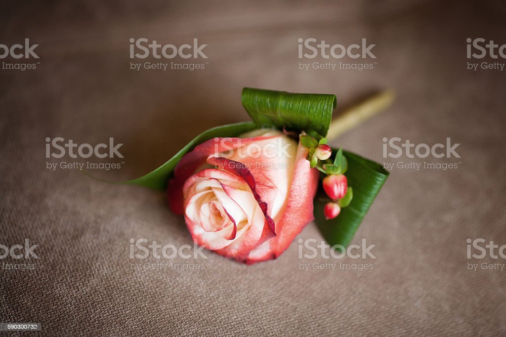 Red rose wedding boutonniere for groom on sofa, close-up royaltyfri bildbanksbilder