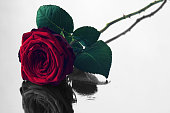 istock red rose with black and white reflection 481227088