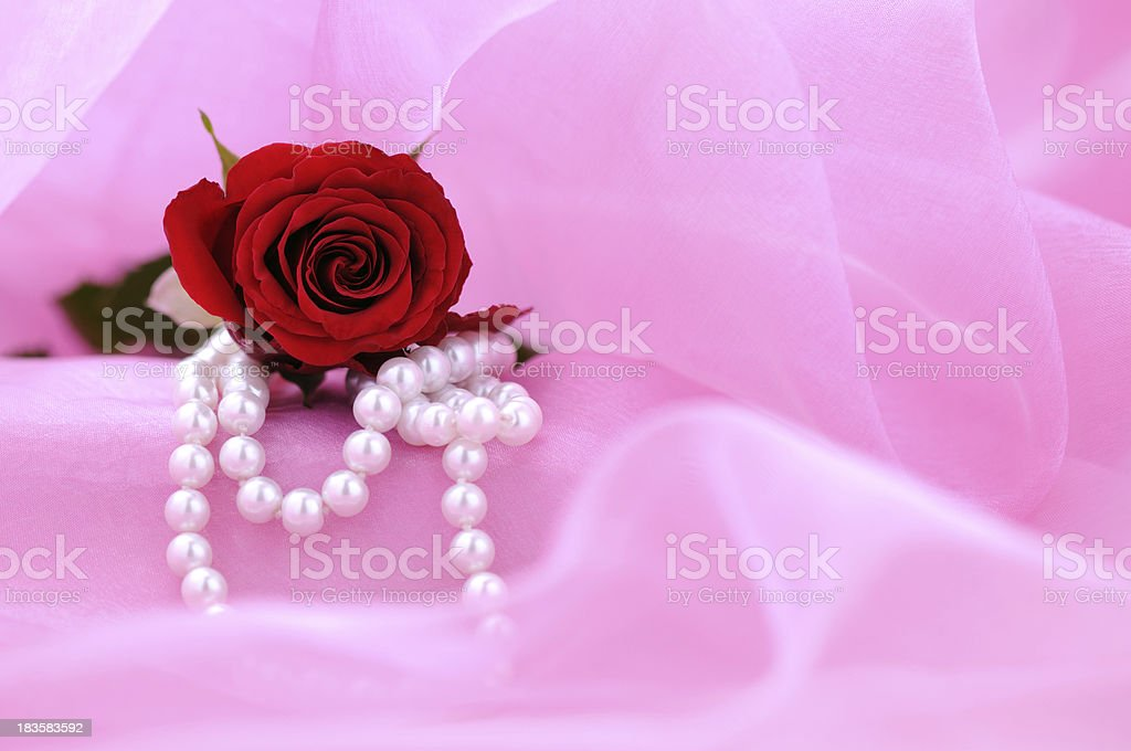 Red Rose with copy space in pink royalty-free stock photo
