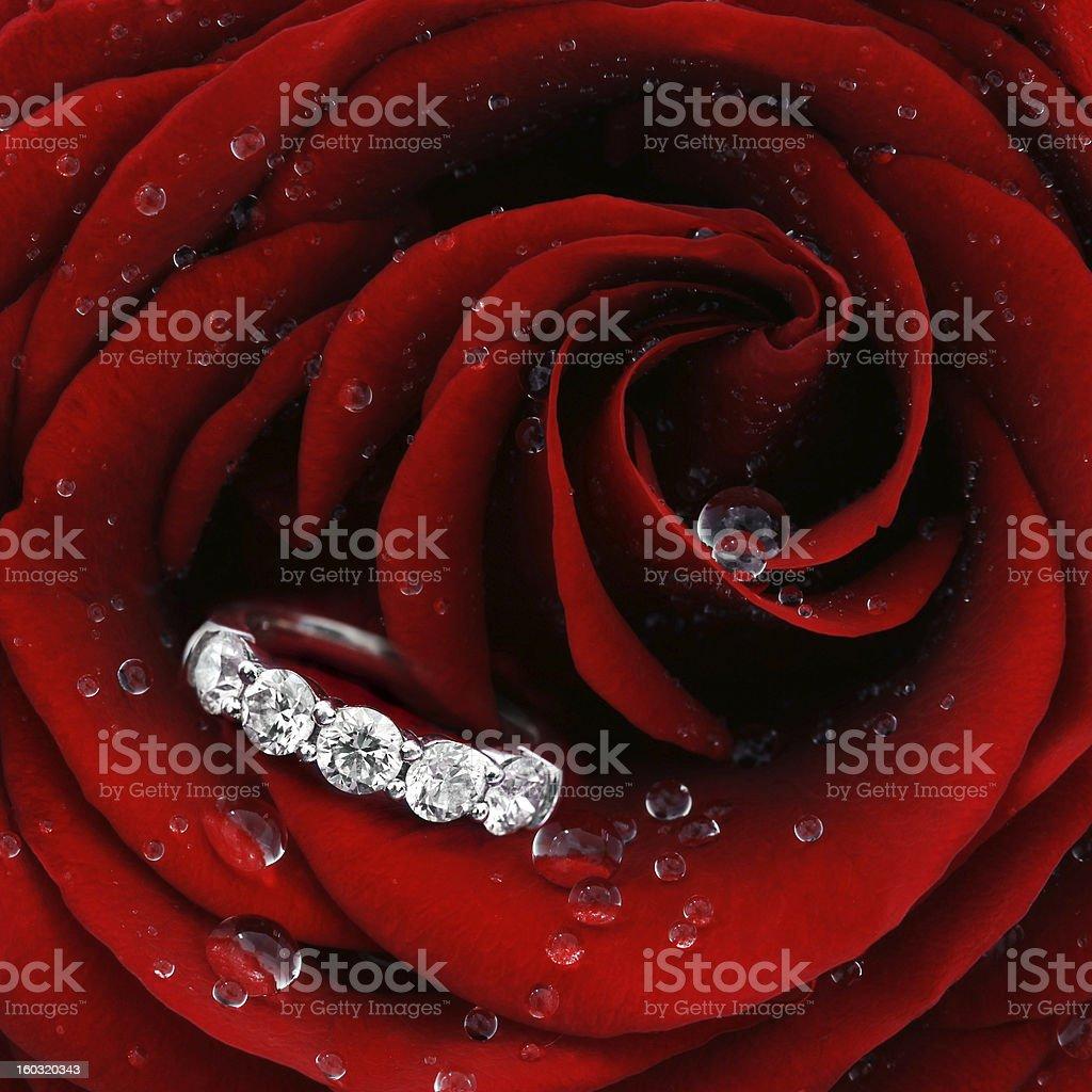 Red rose with diamond ring closeup stock photo