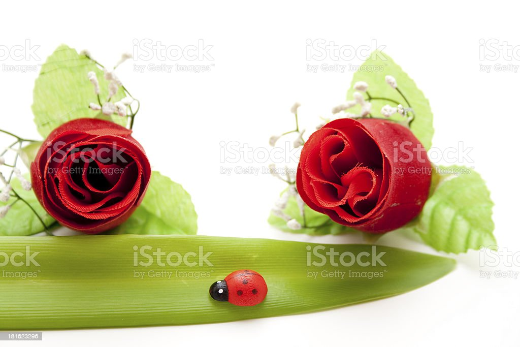 Red rose with leaf and ladybug royalty-free stock photo