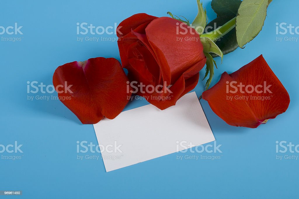 Red rose with mash note royalty-free stock photo