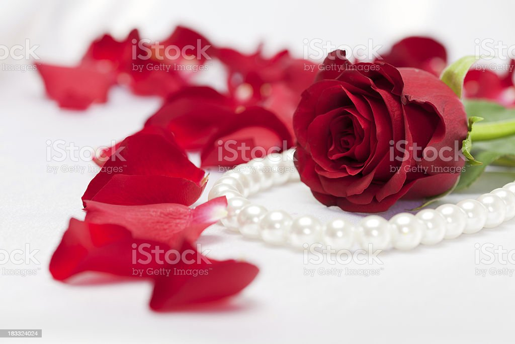 Red rose with petals and pearls on white satin background stock photo