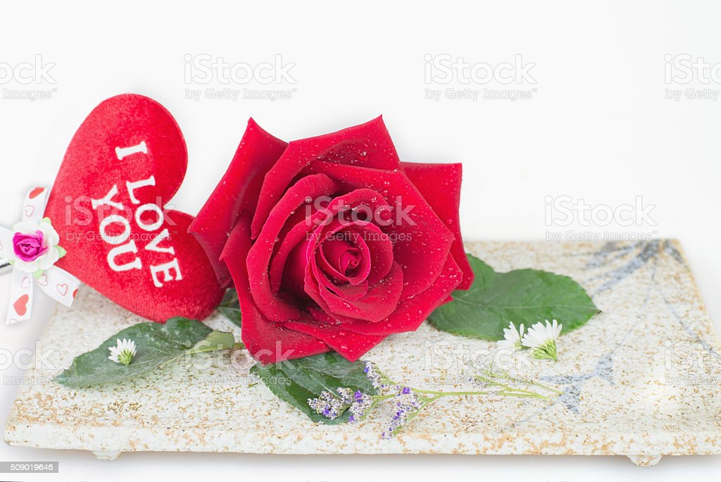 Red rose with white background stock photo