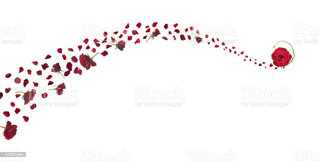 Red Roses and Petals Swirl stock photo