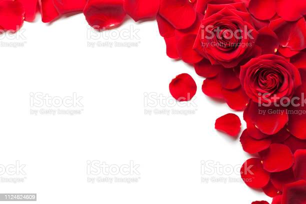 Red roses and rose petals isolated white background picture id1124624609?b=1&k=6&m=1124624609&s=612x612&h=h6i0ointu9 zjb4muwczopwf5kflzeufp2tvq0ihgqk=