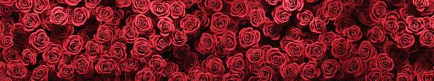 Red roses background picture id1006480632?b=1&k=6&m=1006480632&s=612x612&w=0&h=8j6idcpydaozrn0dr3xu2l0tcynkbihjm78urynliqc=