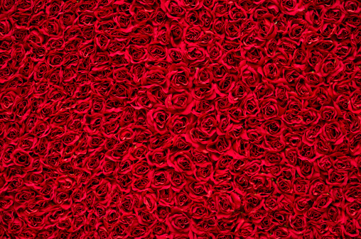 Pink natural roses background for wedding or Valentine day. Top down view.