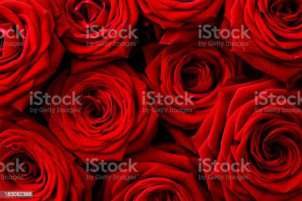 Red roses background picture id183062368?b=1&k=6&m=183062368&s=612x612&h=nqmmg6mgy6as4zbyan3ur2zb83v zbocrupgv153zes=