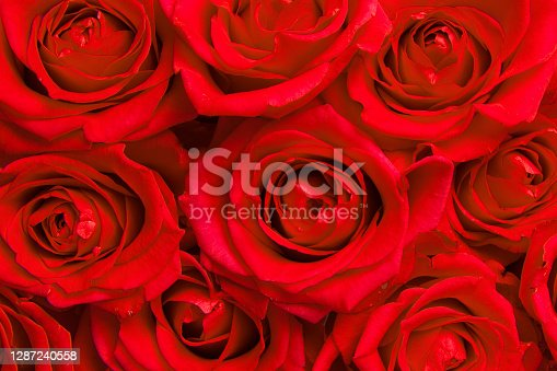 istock Red roses blooming seen from above filling the image 1287240558