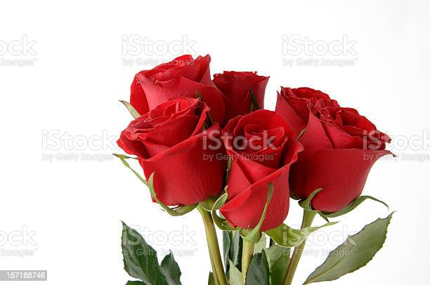 Red roses bouquet in white background picture id157188746?b=1&k=6&m=157188746&s=612x612&h=x ztgoxshq ppscmx3jst4ywb64mq71k19s2mbh2bgo=