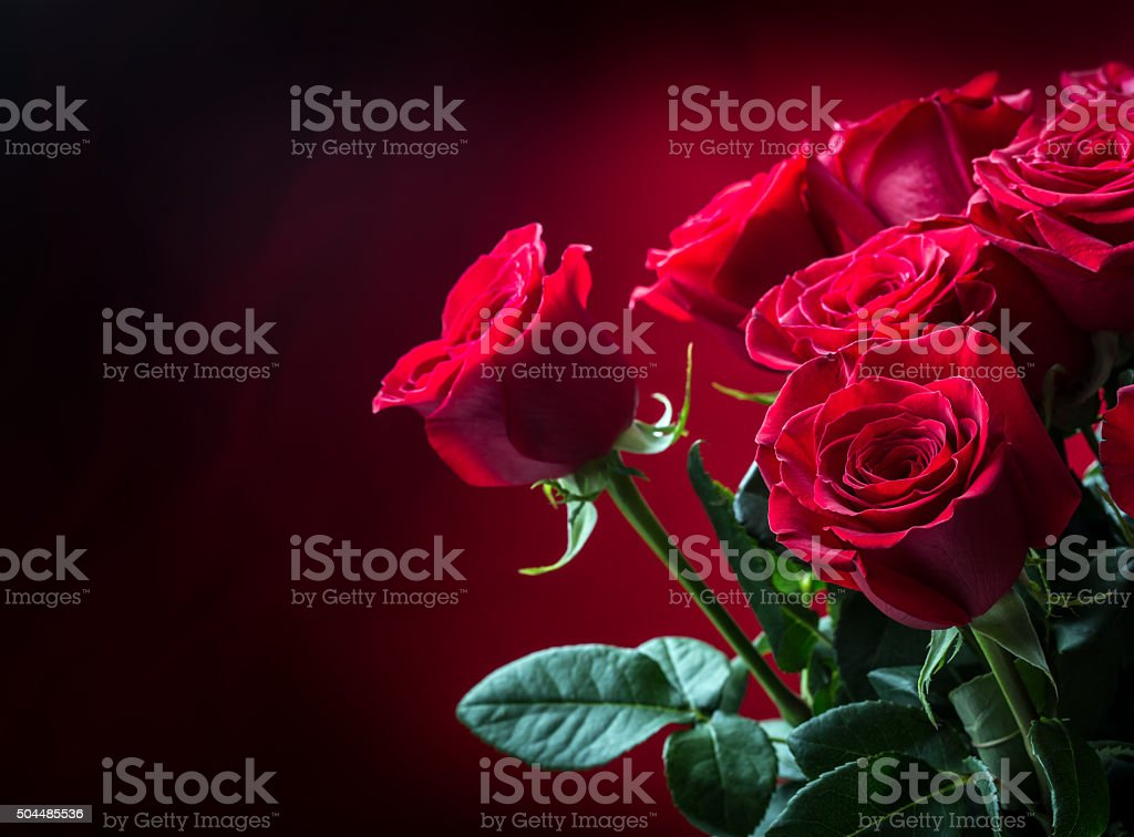 Rose. Red roses. Bouquet of red roses. Several roses on Granite...