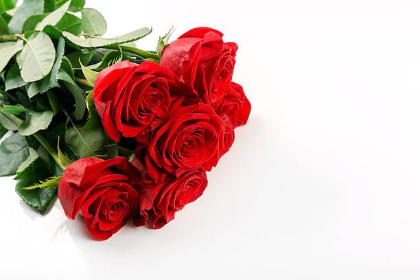 Red roses bouquet on white background with copy space picture id628092928?b=1&k=6&m=628092928&s=612x612&w=0&h=slribozpzxtwm vt3lctsqi q3pt  dgtlhqroebc4k=