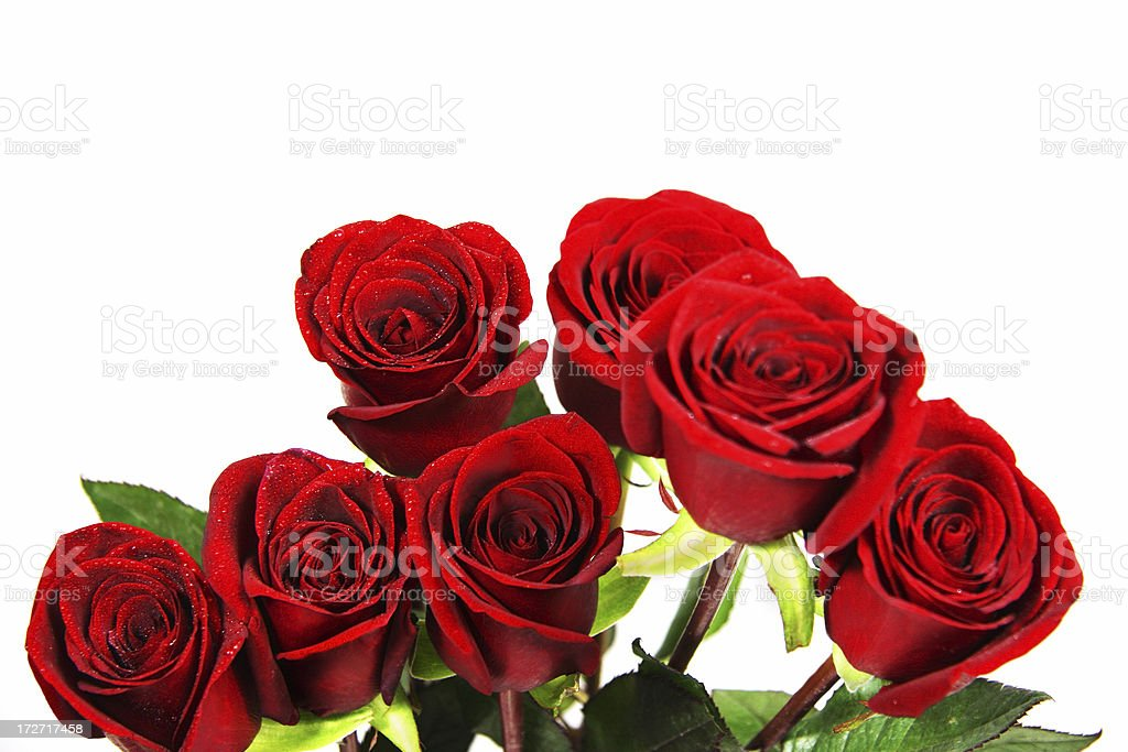 Red Roses Bouquet with White Background royalty-free stock photo