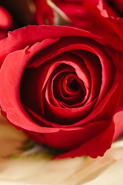 Red roses close up picture id470989410?b=1&k=6&m=470989410&s=612x612&w=0&h=ohsbpoqh4ocmwmopeg1zbnmsjoy9uh6x rqwuxk5gxa=