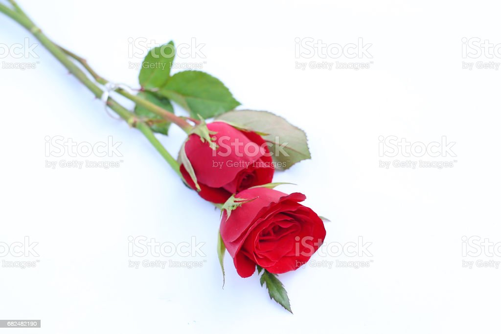 Red roses flower with wedding ring on white background. royalty-free stock photo