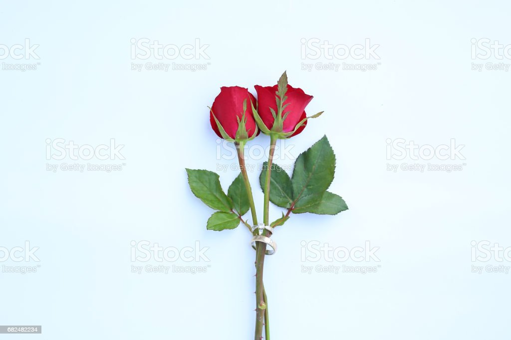 Red roses flower with wedding ring on white background. royalty free stockfoto