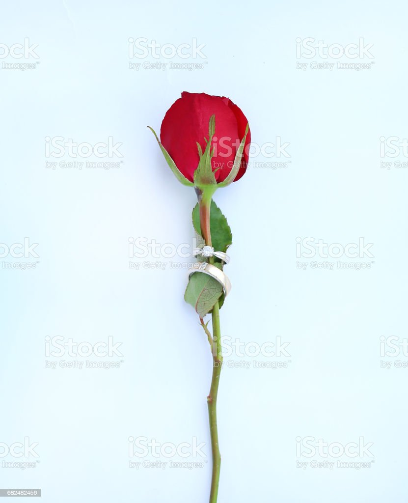 Red roses flower with wedding ring on white background. foto de stock libre de derechos