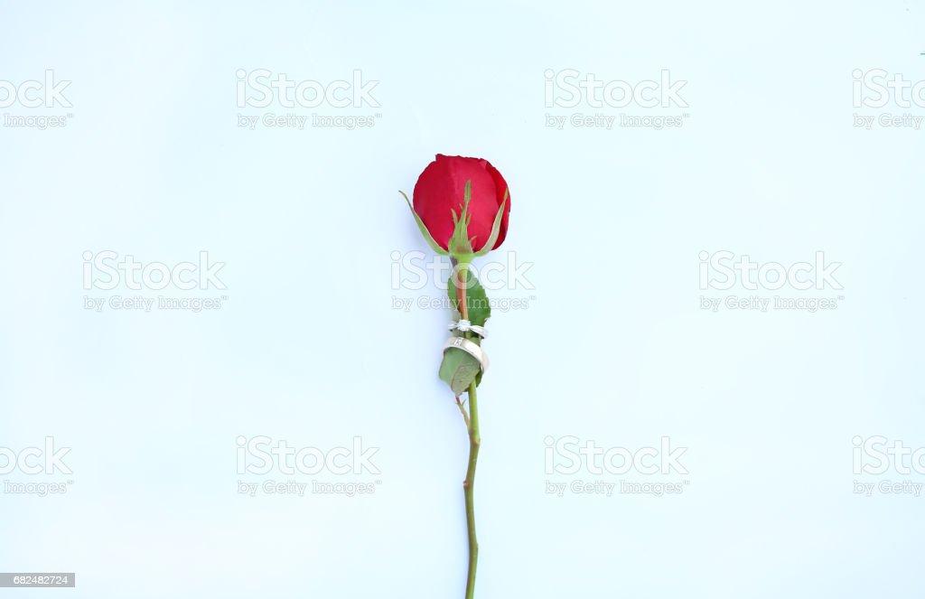 Red roses flower with wedding ring on white background. foto de stock libre de derechos