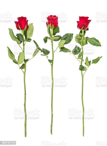Red roses green leaves isolated white background picture id905754124?b=1&k=6&m=905754124&s=612x612&h=v6 ea0dlccfcsvozpy4s x01mgtpmosjfyq7zqidagw=