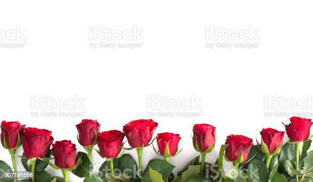Red roses isolated on white picture id907191556?b=1&k=6&m=907191556&s=612x612&h=aenxxvr rhnamd5s 60dn9um3stqobqkxqwwtxlqjts=
