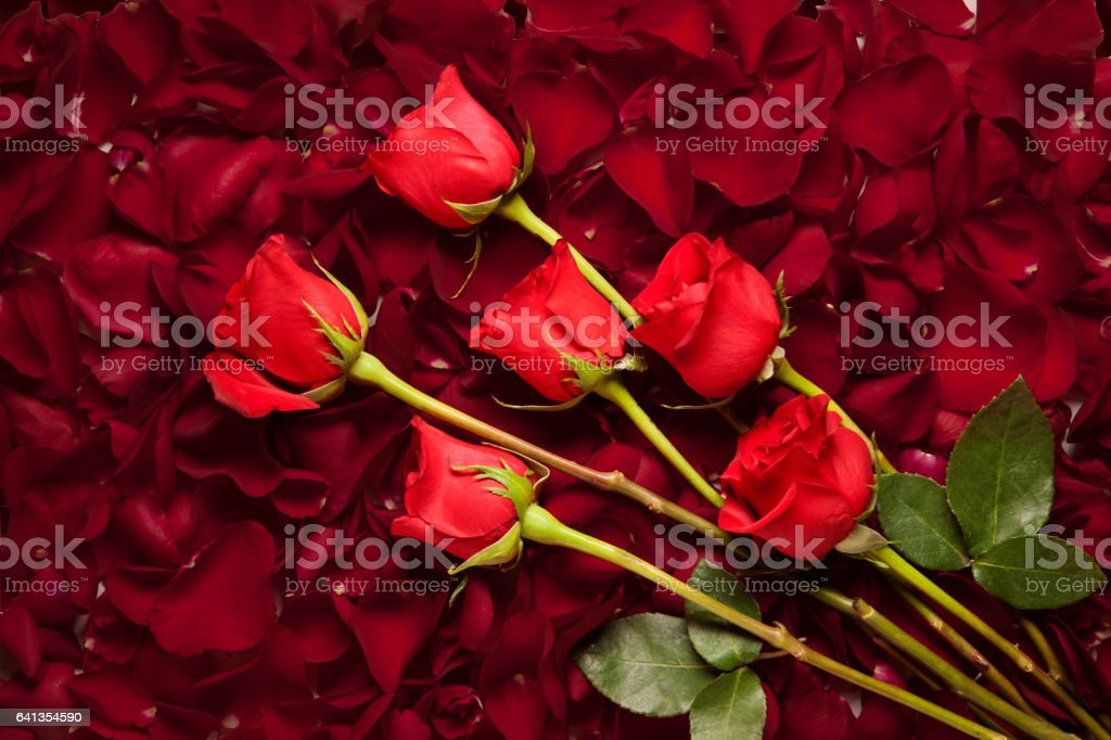 Red Roses laying on a bed of rose petals stock photo