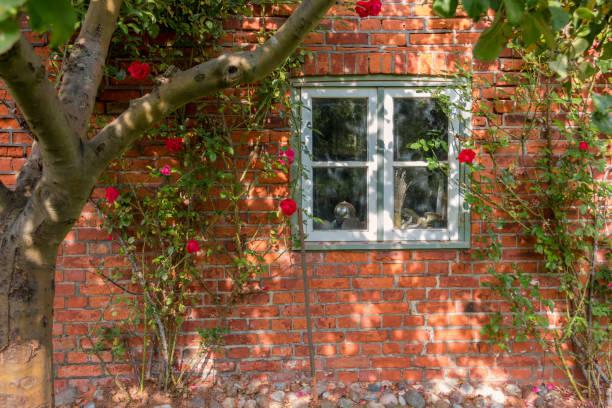 Rote Rosen an einer Wand – Foto