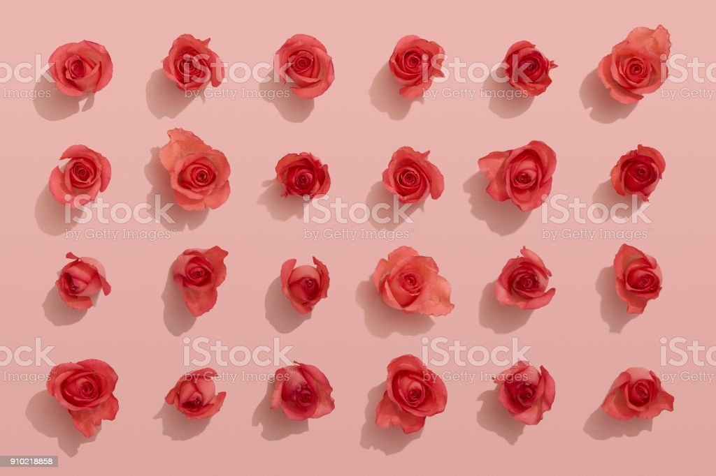 Red roses on pink background royalty-free stock photo