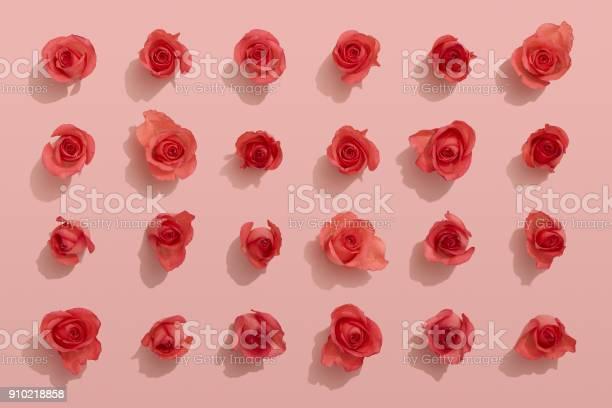 Red roses on pink background picture id910218858?b=1&k=6&m=910218858&s=612x612&h=gjffszdbn0wmo8pthe84uu2t8s6hnhoochpi75diyzo=